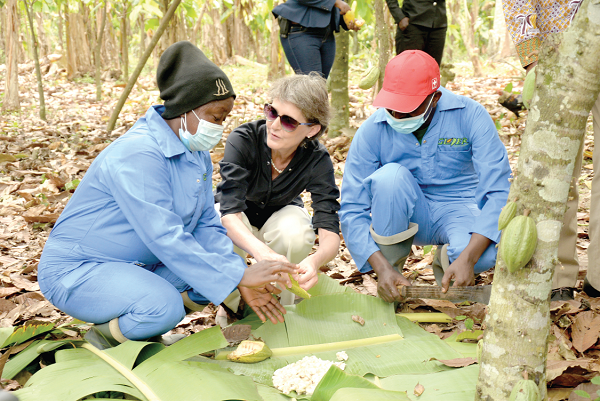 15 Million cocoa seedlings distributed to farmers